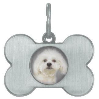 Cute white Maltese puppy Pet Name Tag