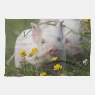 Cute White Piglet in Field of Yellow Flowers Kitchen Towel