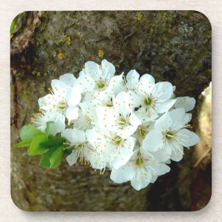 Cute White Plum Blossom Drink Coaster