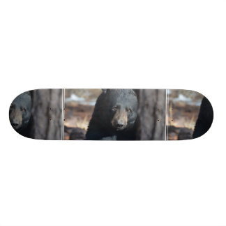 Cute Wild Black Bear Skate Deck