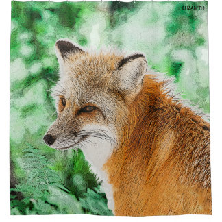 Cute Wild Red Fox Drawing