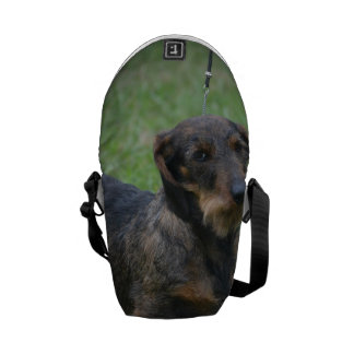 Cute Wire Haired Dachshund Courier Bags