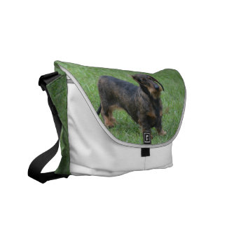 Cute Wire Haired Dachshund Messenger Bags