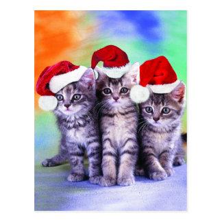 Cute x-mas kittens postcard