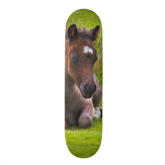 Cute Yearling Foal skateboard deck