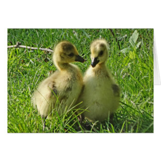 Cute Yellow Baby Canada Geese Gosling Pair Card