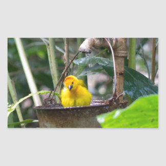 Cute, yellow bird bathing in a bucket