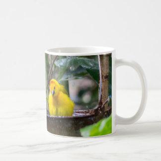 Cute, yellow bird bathing in a bucket coffee mug