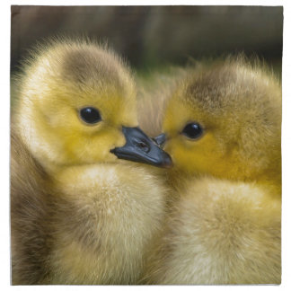 Cute Yellow Fluffy Ducklings, Baby Ducks Napkin