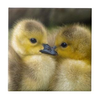 Cute Yellow Fluffy Ducklings, Baby Ducks Tile