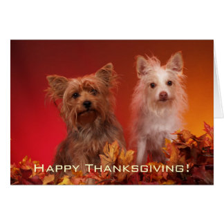 Cute Yorkie Thanksgiving Greeting Cards