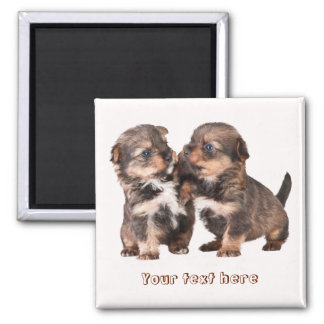 Cute Yorkshire Puppies Magnet