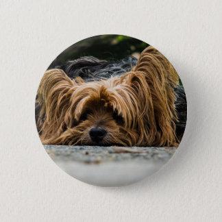 Cute Yorkshire Puppy 2 Inch Round Button
