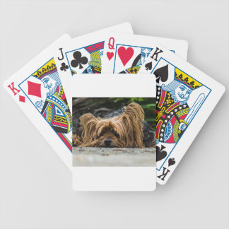 Cute Yorkshire Puppy Bicycle Playing Cards
