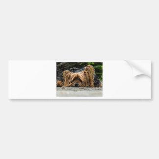 Cute Yorkshire Puppy Bumper Sticker