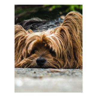 Cute Yorkshire Puppy Customized Letterhead