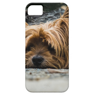 Cute Yorkshire Puppy iPhone 5 Case