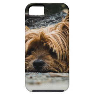 Cute Yorkshire Puppy iPhone 5 Cover