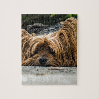 Cute Yorkshire Puppy Jigsaw Puzzle