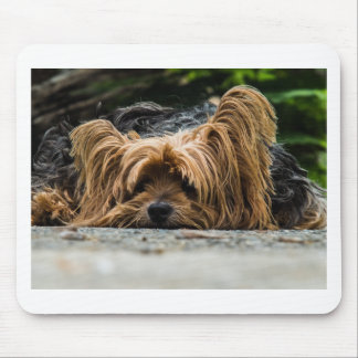 Cute Yorkshire Puppy Mouse Pad