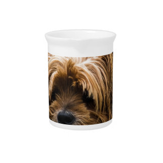 Cute Yorkshire Puppy Pitcher