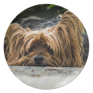 Cute Yorkshire Puppy Plate