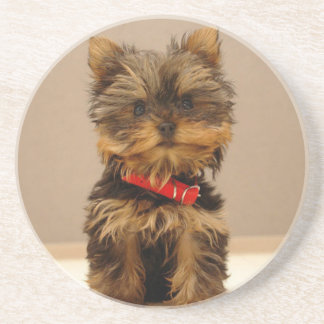 Cute Yorkshire Terrier Coaster