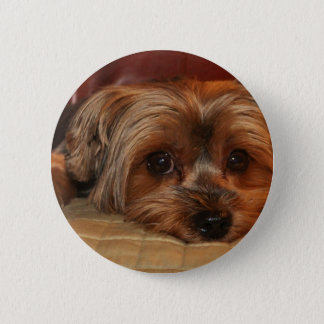 Cute Yorkshire Terrier Dog 2 Inch Round Button