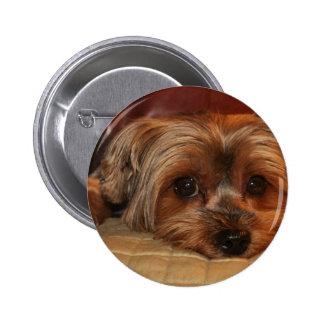 Cute Yorkshire Terrier Dog 2 Inch Round Button
