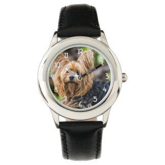 Cute Yorkshire Terrier Dog in garden Watches