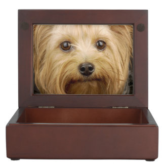 Cute Yorkshire Terrier Keepsake Box