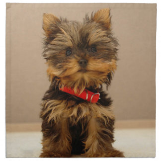 Cute Yorkshire Terrier Napkin