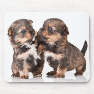 Cute Yorkshire Terrier Puppies Mouse Pad