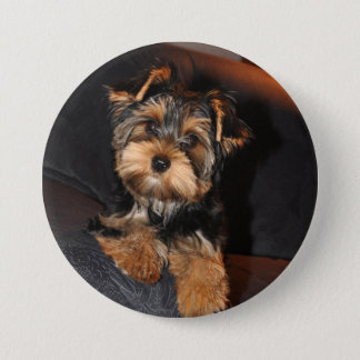 Cute Yorkshire Terrier Puppy Dog 3 Inch Round Button