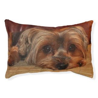 Cute Yorkshire Terrier Puppy Dog Small Dog Bed
