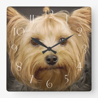 Cute Yorkshire Terrier Square Wall Clock