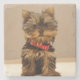 Cute Yorkshire Terrier Stone Coaster