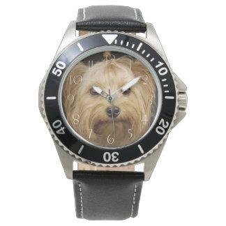 Cute Yorkshire Terrier Watch