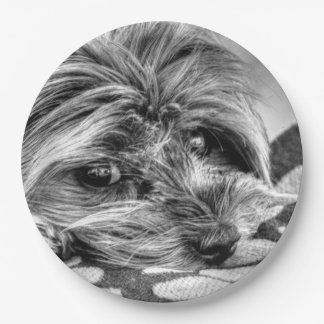 Cute Yorkshire Terrier Yorkie Black and White Art Paper Plate