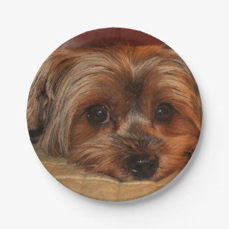Cute Yorkshire terrier,yorkie puppy dog Paper Plate