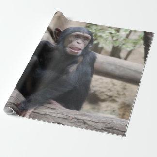 cute young chimpanzee