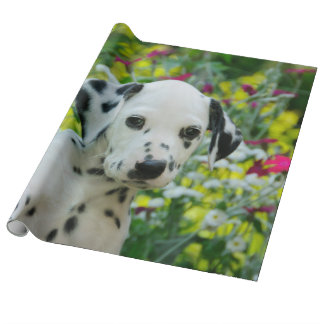 Cute Young Dalmatian Dog Puppy Portrait, Roll