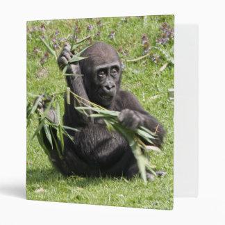 Cute young gorilla 3 ring binders