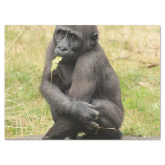 Cute young gorilla tissue paper