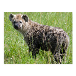 Cute Young Hyena with Wet Fur in Green Grass Postcard
