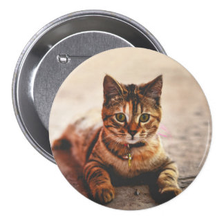 Cute Young Tabby Cat Kitten Kitty Pet 3 Inch Round Button