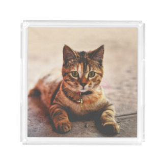 Cute Young Tabby Cat Kitten Kitty Pet Acrylic Tray