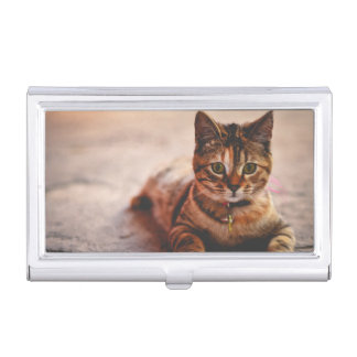 Cute Young Tabby Cat Kitten Kitty Pet Case For Business Cards