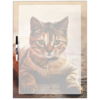 Cute Young Tabby Cat Kitten Kitty Pet Dry Erase Board