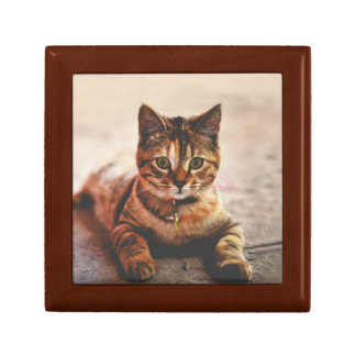 Cute Young Tabby Cat Kitten Kitty Pet Gift Box